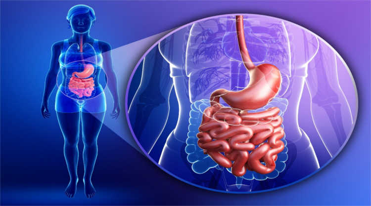 желудочно-кишечный тракт